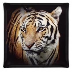 Plateau Acrylic 36x36 Portrait Tigre