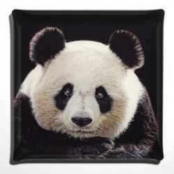Plateau Acrylic 36x36 Portrait Panda